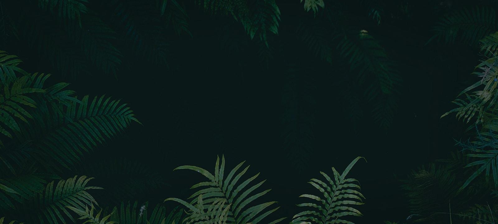 Background Dark